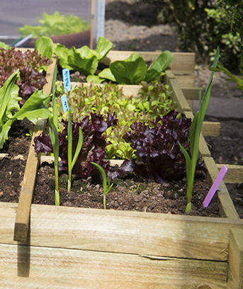 Its gardening season! First-time gardeners may need some advice on how to get started. One...