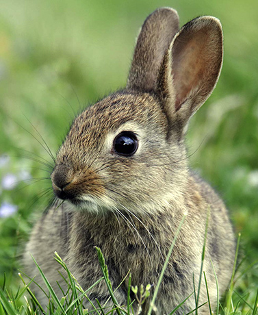 Bunnies, squirrels and chipmunks are so cute, but what they can do to your garden isnt...