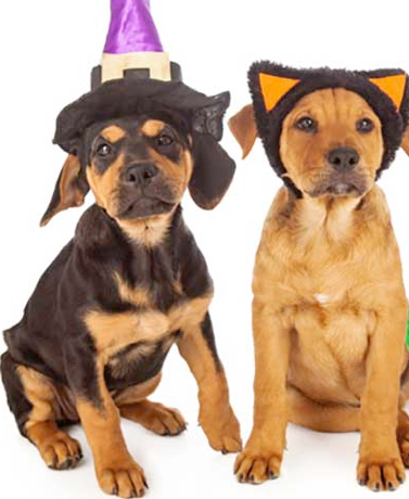 Halloween Pet Safety: What To Watch Out For To Keep Your Pet Safe