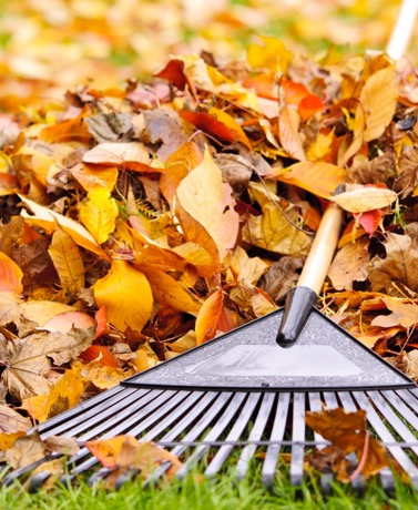 Study these techniques to help you deal with pesky autumn leaves after your trees start shedding.