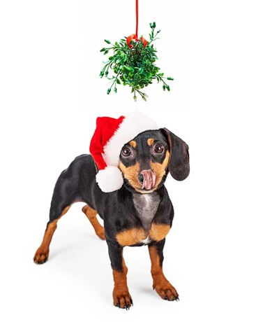 Pet-Friendly Ways To Deck The Halls