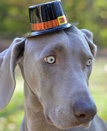 Tips For Managing Your Pets On Thanksgiving