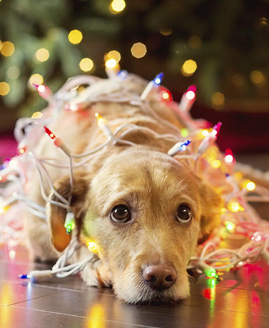Ideas To Mark The Holidays For Your Pets