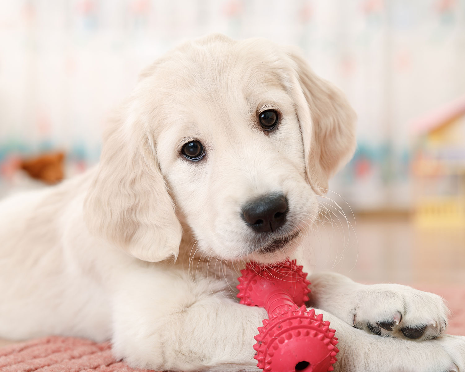 Puppy playing with chew toy.