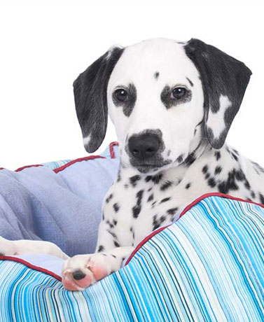 New Year, New Rules: How To Set Pet Boundaries In The Bedroom