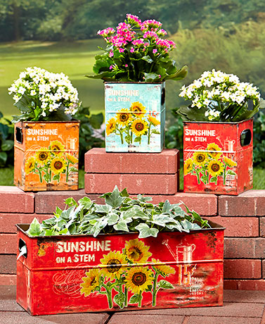 Set of 4 Sunflower Planters