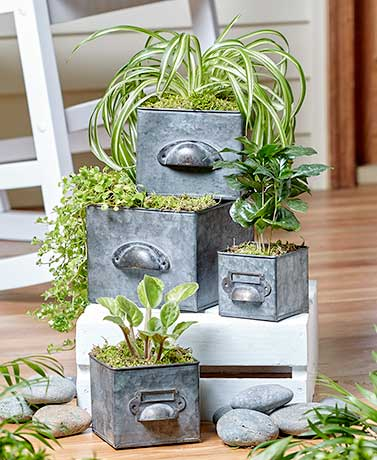 Set of 4 Galvanized Drawer Planters