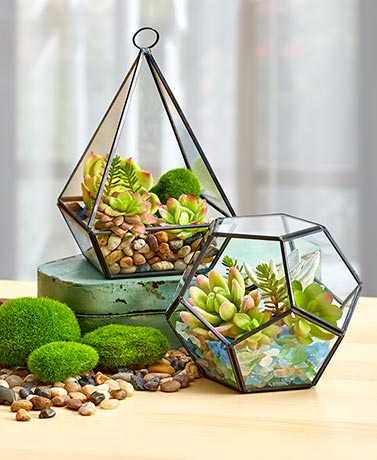 Decorative Terrariums or Filler