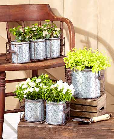 Galvanized Planters in Wire Basket