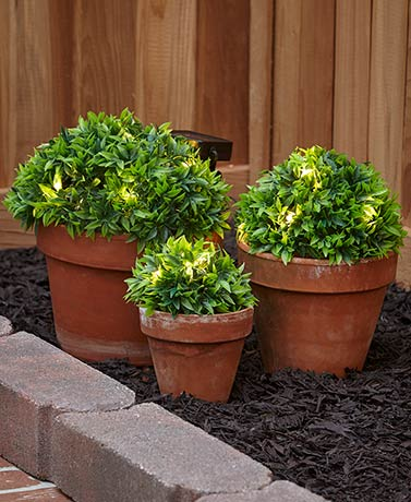 Sets of 3 Solar Half-Ball Ground Plants - Green