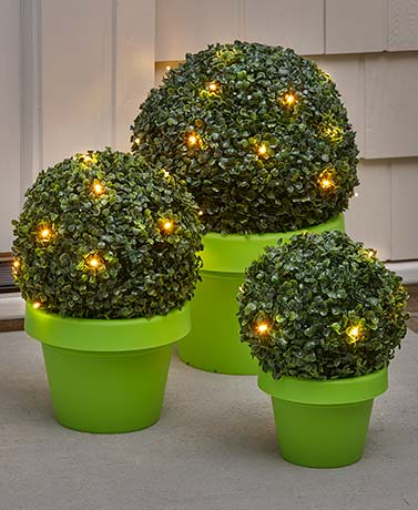 Lighted Boxwood Topiaries or Planter Set