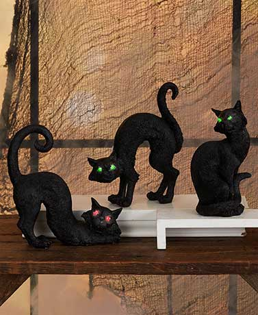 Black Cats with Lighted Eyes