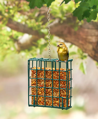 Suet Cakes or Feeder for Birds